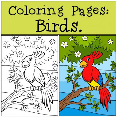 Coloring Pages: Birds. Little cute parrot sits on the tree branc