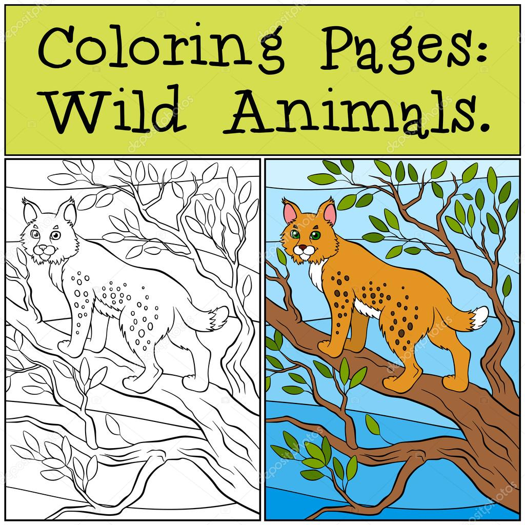 Coloring Pages: Wild Animals. Little cute lynx stands on the tre ...