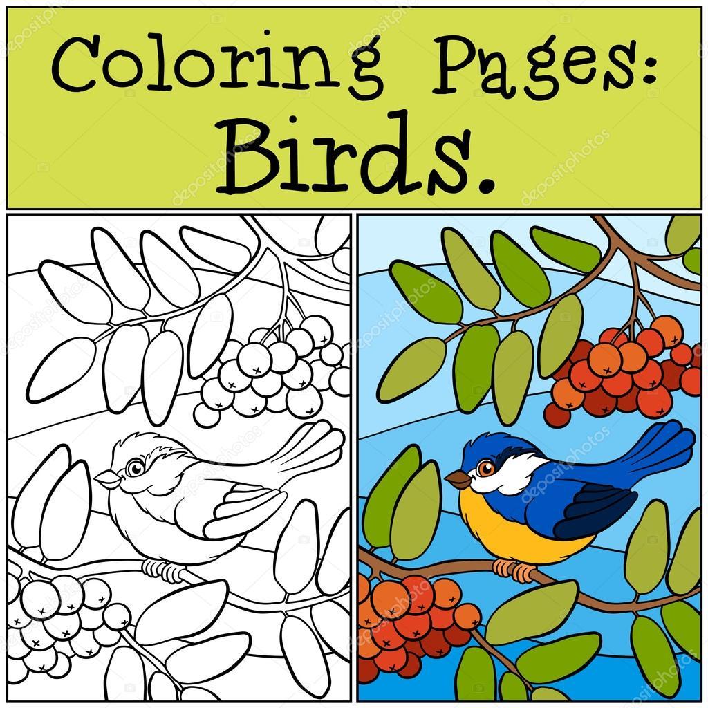 Kleurplaten Kleine Vogels.Kleurplaten Vogels Kleine Schattige Mees Stockvector C Ya Mayka