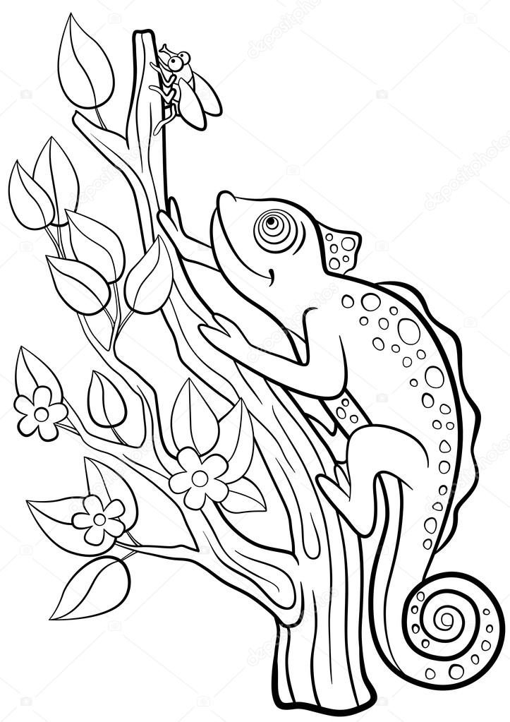 Coloring pages. Wild animals. Little cute chameleon looks at the ...