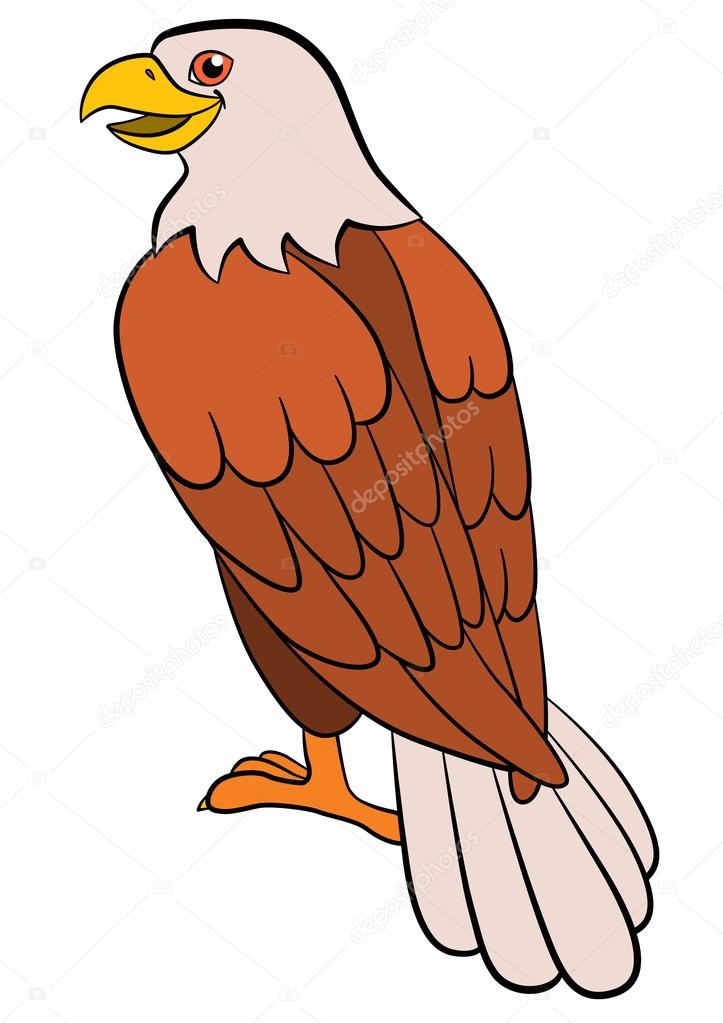 Merveilleux Cartoon Birds For Kids: Eagle. Cute Bald Eagle Sits And Smiles. U2014 Vector By  Ya Mayka