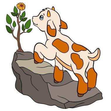 Cartoon farm animals for kids. Little cute baby goat.