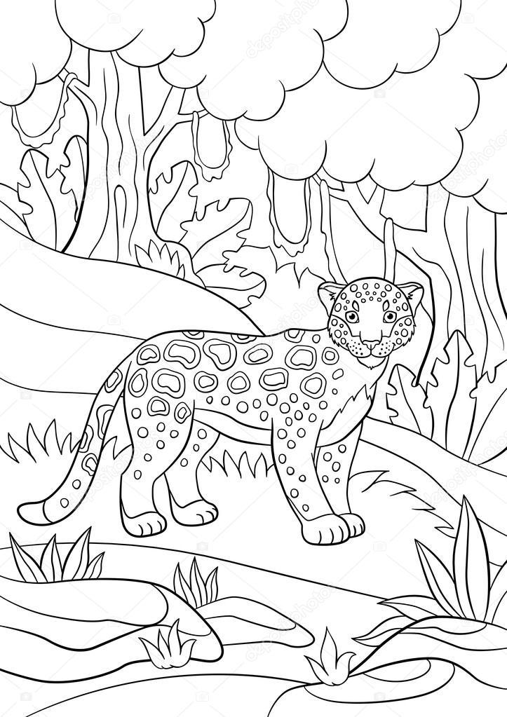 Animales Del Bosque Tropical Para Colorear Dibujos Para Colorear
