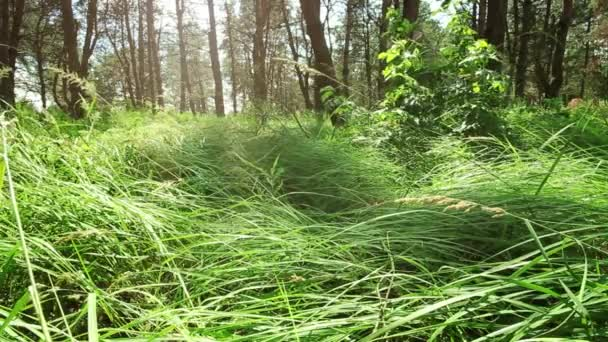 klidné místo v lese, stromy, tráva