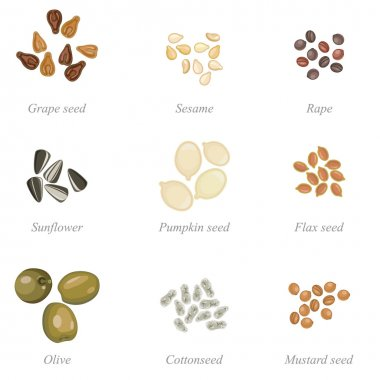 Icon set of oilseeds and oil fruits
