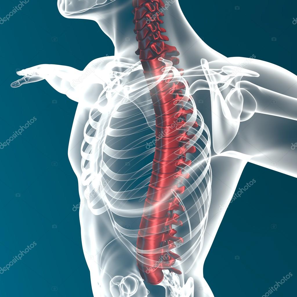 Columna vertebral humana rayos x — Foto de stock © vampy1 #64757667
