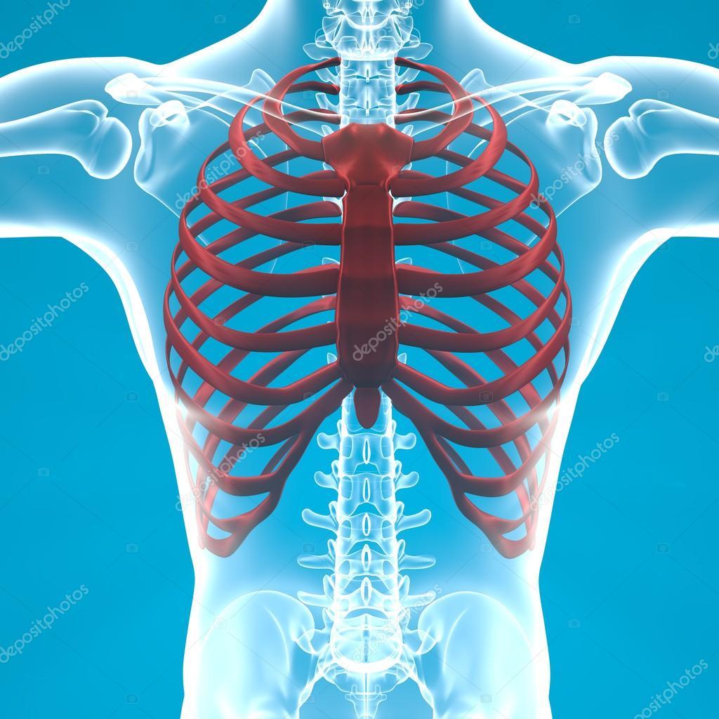 O melhor cirurgião em SPb em aumento em um peito