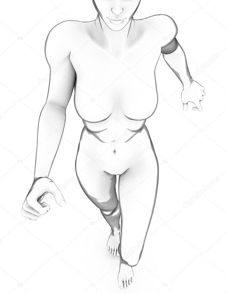 女性の人体解剖学 ストック写真 vampy1 65588769
