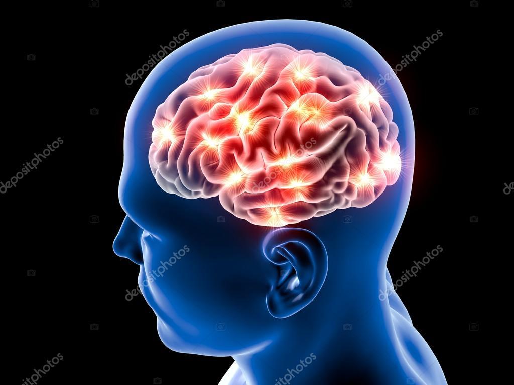 Anatomía de las neuronas del cerebro — Fotos de Stock © vampy1 #80423138