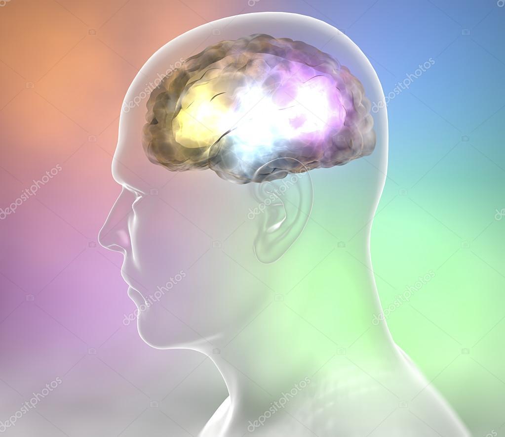 Anatomía de las neuronas del cerebro — Fotos de Stock © vampy1 #80428870