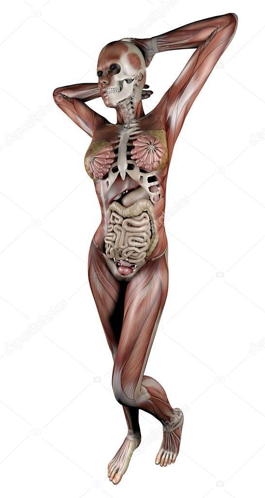 cuerpo de la mujer con los músculos esqueléticos y órganos — Foto de ...
