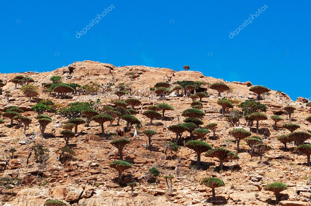 Socotra, Yemen, overview of the Dragon Blood Trees forest in Homhil Plateau