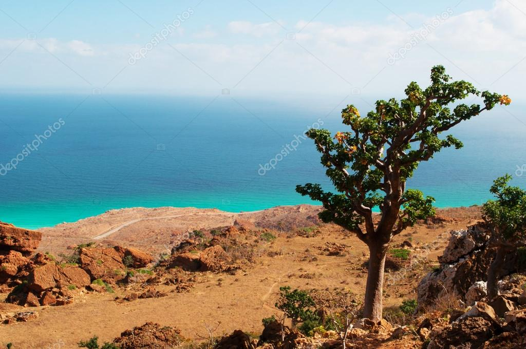 Island of Socotra, the path to Hoq Cave, overview from Homhil Plateau: a Bottle tree and the Arabian Sea