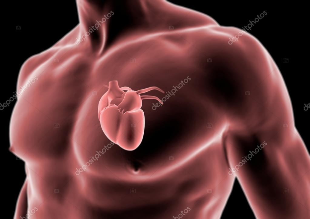 3D Körper und Herz Anatomie des Menschen, Röntgendiagnostik ...