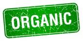 organické Zelený čtvereček grunge texturou izolované razítko