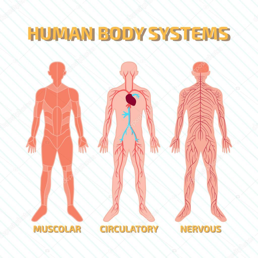 menschlichen Körpersysteme — Stockvektor © nicolarenna4 #102003766
