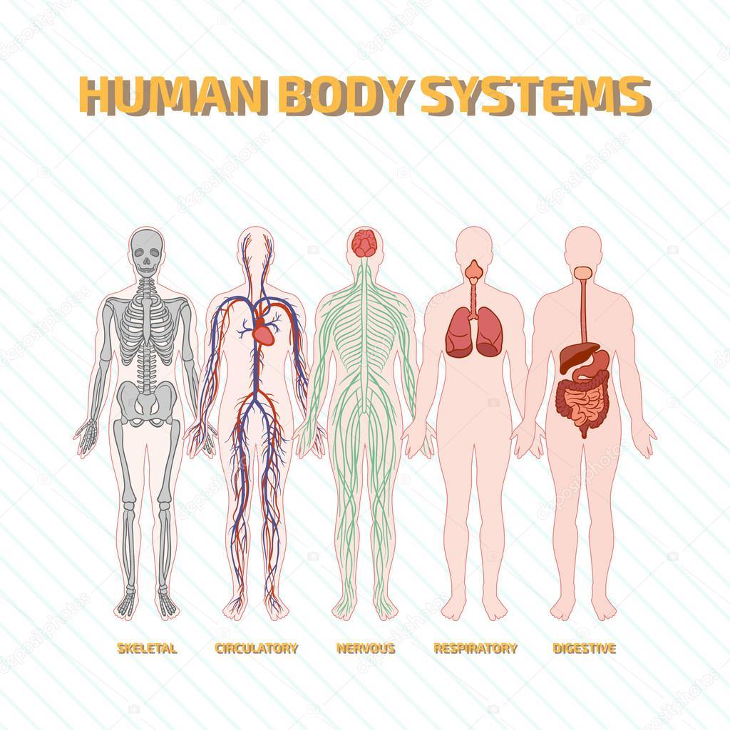 menschlichen Körpersysteme — Stockvektor © nicolarenna4 #102003824