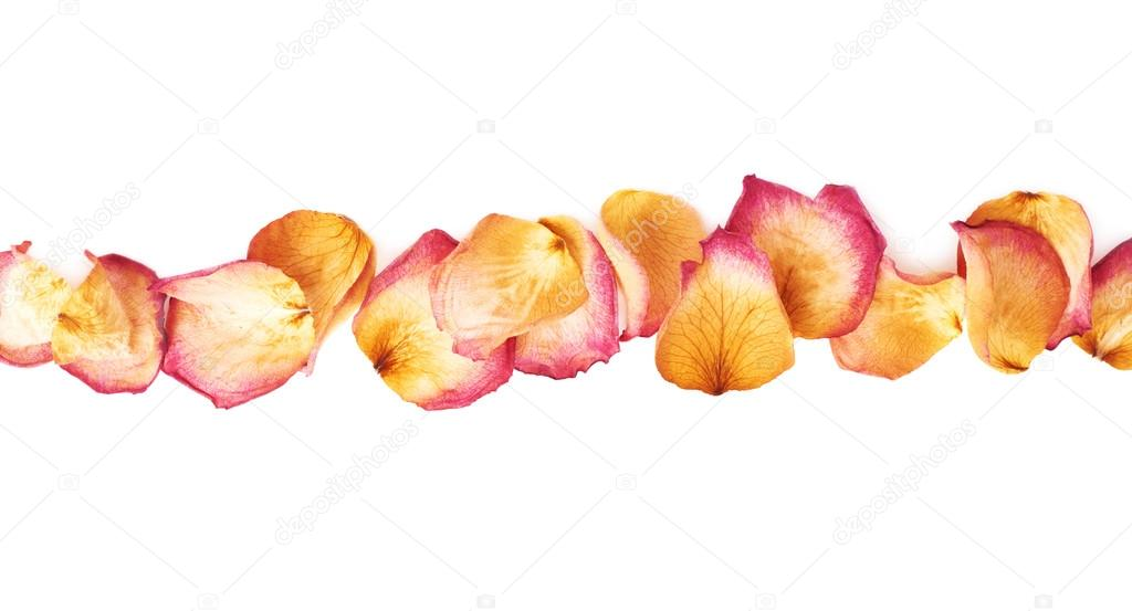 Line made of pink rose petals as a romantic composition over white background
