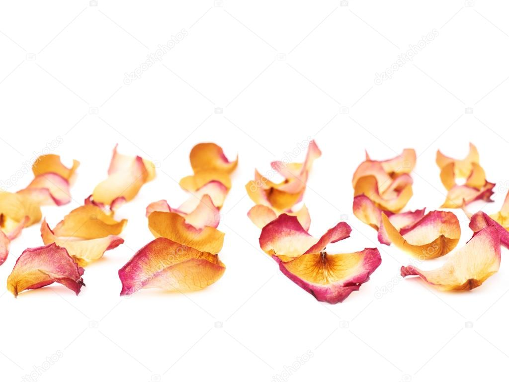 White surface covered with pink rose petals as a romantic background composition