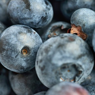 Bilberry or blueberry as texture background