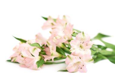 Pile of alstroemeria flowers