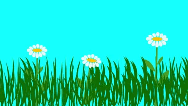 Cartoon animation of plants and flowers, blue screen chroma key, flat design