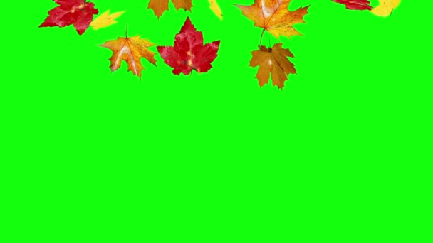 autumn leaves falling green screen
