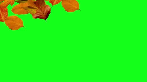 Autumn Leaves Falling Green Screen Stock Video C Jhnbnk 80051922