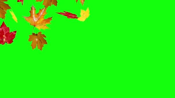 Herbst Blätter fallen grünen Bildschirm