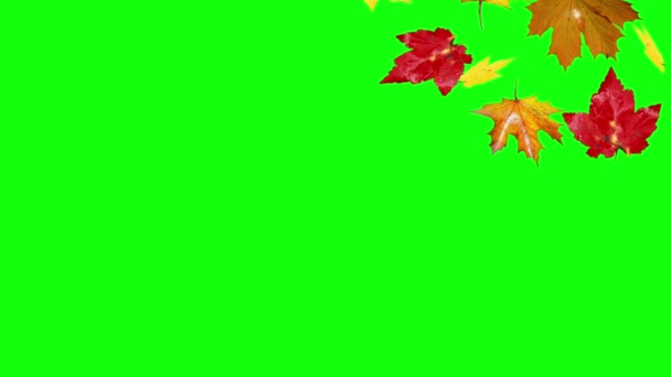 Autumn Leaves Falling Green Screen Stock Video C Jhnbnk 80052500