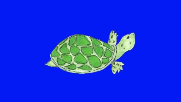 2D cartoon tortoise walking loop blue screen