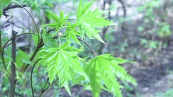 Zelené listy na jaře času