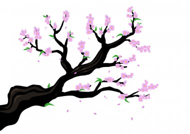 A Branch of a Cherry Blossom or genus Prunus Serrulata or  sakura illustration. Editable Clip art.