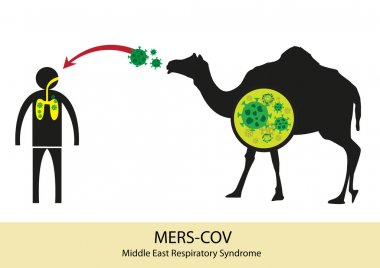Mers Corona Virus transfer from camel to human. MERS-COV originated from Middle East. Editable Clip Art.