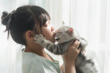 asian girl playing with american shorthair cat