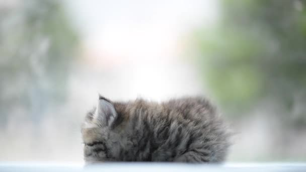 Cute tabby kitten playing on the bed