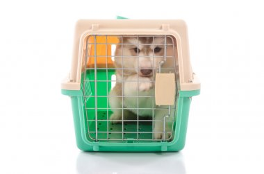 Cute siberian husky puppy in travel box