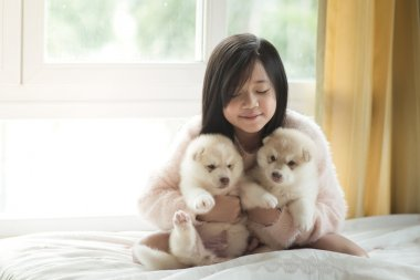 Little asian playing with siberian husky puppies