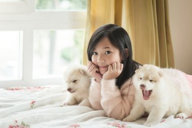 Little asian girl lying with two siberian husky puppies