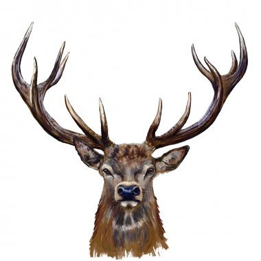 deer head in front