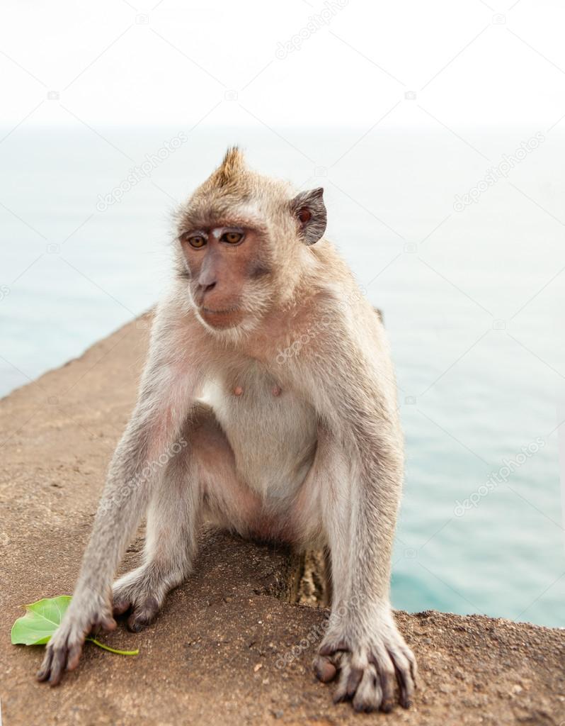 Funny monkey eating a banana