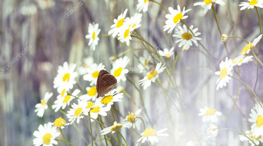 butterfly and flowers in summer