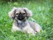 Fotografie Funny dog outdoors