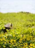 louka s divokými květy