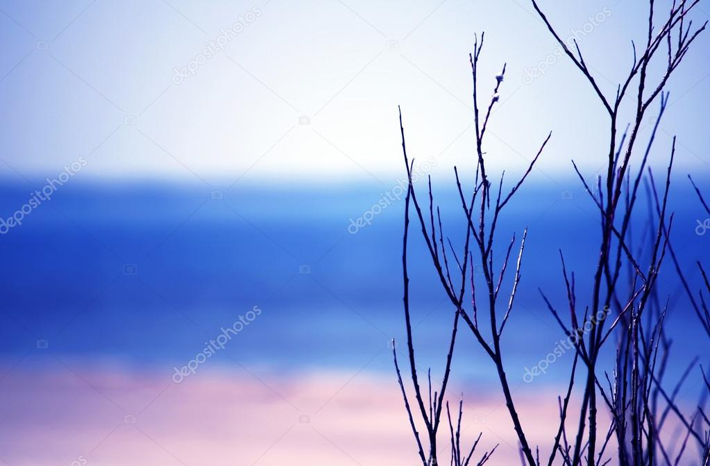 Branches on beautiful sky background