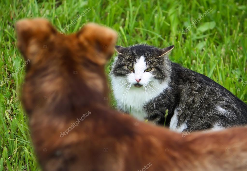 Cat defends its territory