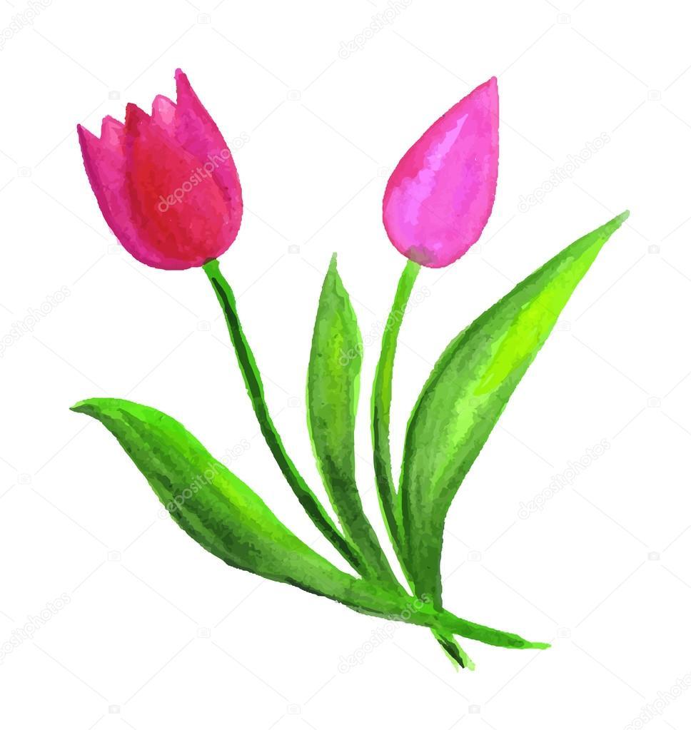 Watercolor Tulip Flowers Stock Vector C Nightlyviolet 76780091