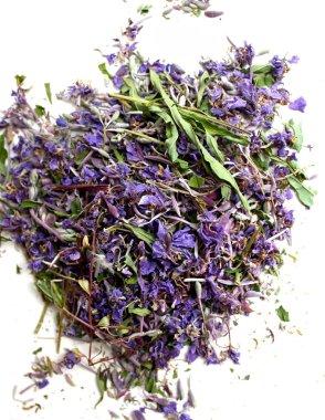 Blooming sally purple flowers