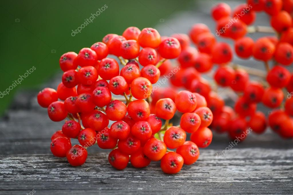 Rowan berries on wooden boards