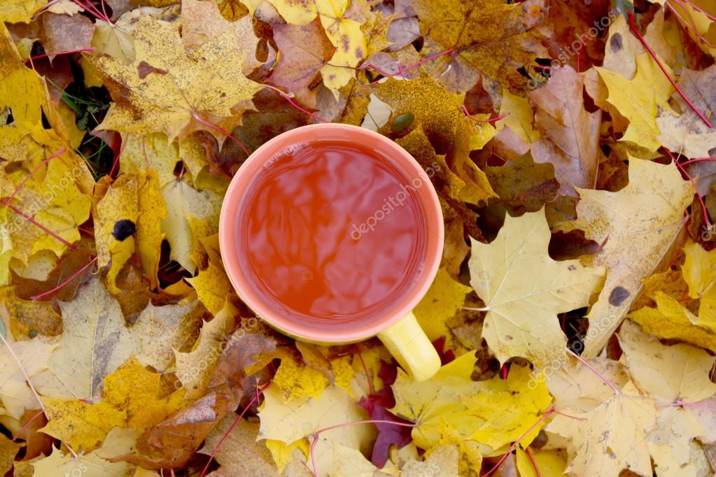 Cup of tea with autumn maple leaves.